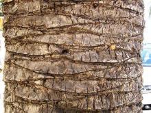 Bark 002