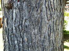 Bark 005