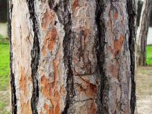 Bark 012