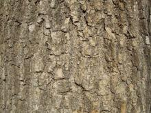 Bark 022