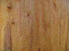 Bark 027