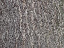 Bark 029