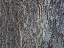 Bark 030