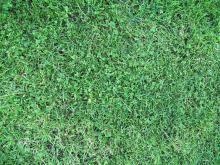 Grass 005