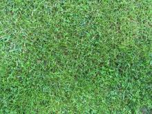 Grass 006