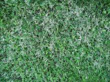 Grass 007