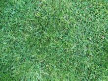 Grass 004