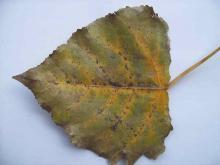 Leaves 001
