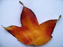 Leaves 005