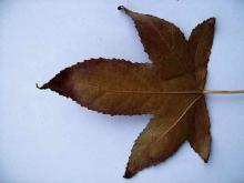 Leaves 009
