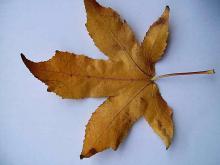 Leaves 015