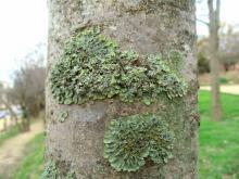 Moss 001