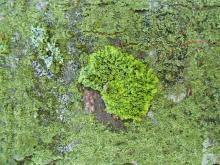 Moss 011