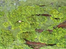 Moss 012