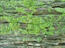 Moss 015