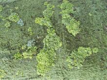 Moss 016
