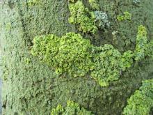 Moss 017