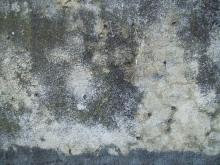 Wall 039