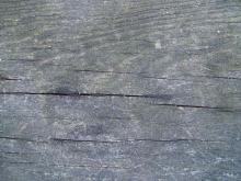 Wood 051