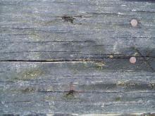 Wood 052