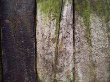 Wood 053