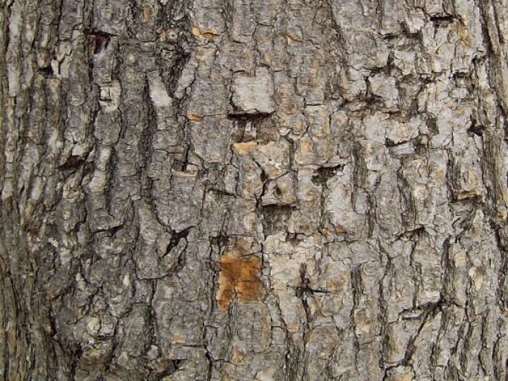 Bark 017