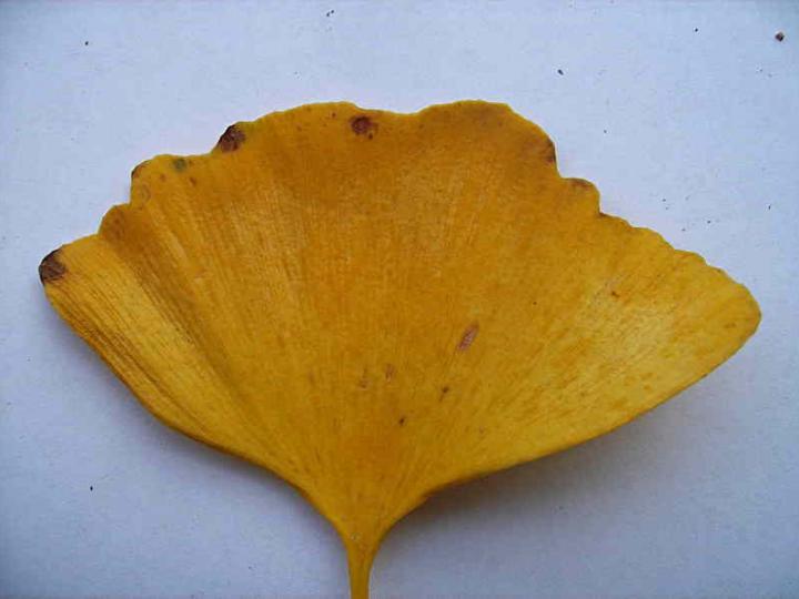 Leaves 010