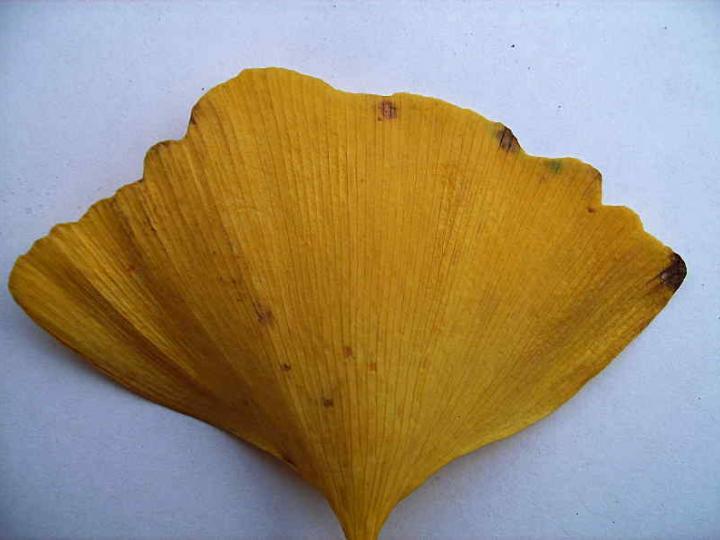 Leaves 011