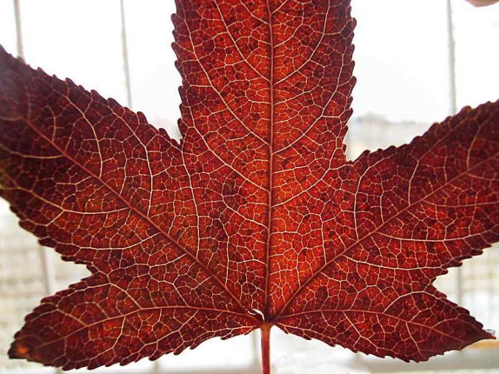 Leaves 012